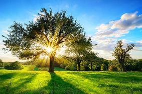 Sun Light thru Trees.jpg