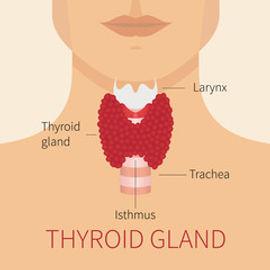 thyroid gland.jpg