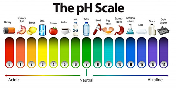pH Scale with food.jpg