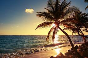 Palm Tree at Ocean.jpg