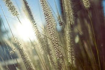 Vision Grasses.jpg