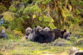 Great Bear Rainforest Bear in Woods.jpg