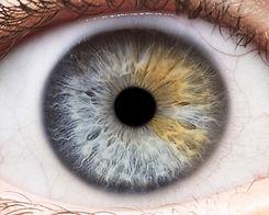 iris eye.jpg