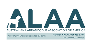 Australian Labradoodle Teddy Bear NEW AL