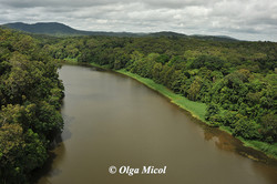 Australia Baron River.jpg