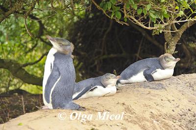 yellow pinguins.jpg