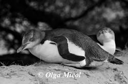 jllow pinguin1.jpg