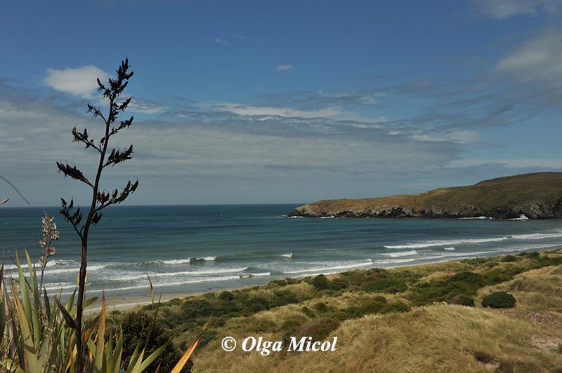 New Zeland Danedin2.jpg