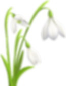 snowdrop2.png