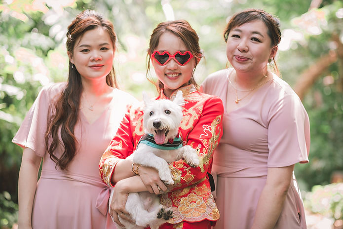 Pet Wedding Singapore