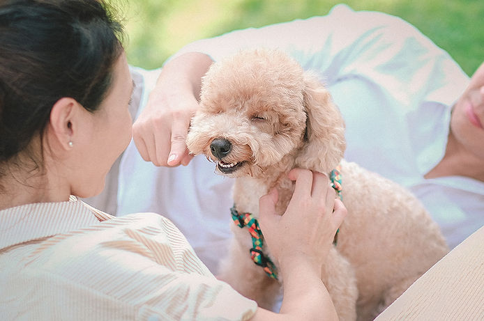 poodle puppy photoshoot singapore