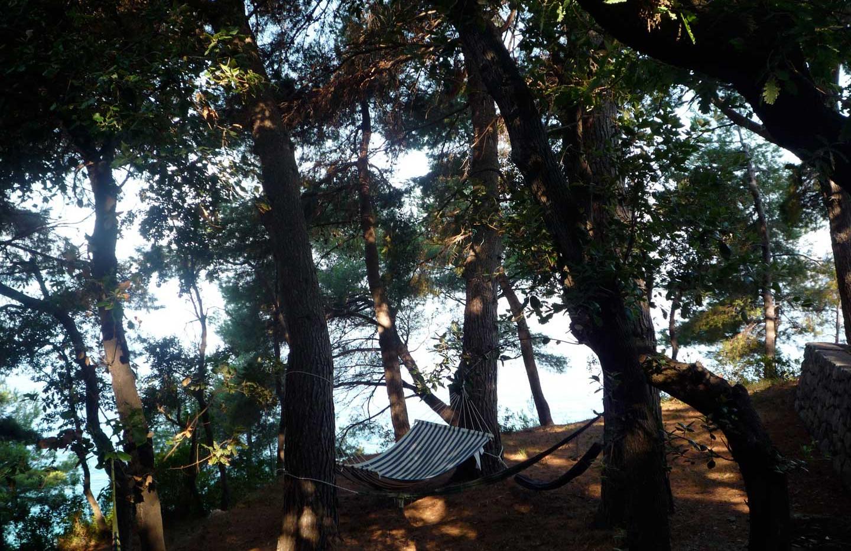 Hammock under the pines