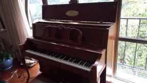 又一個客人可以望住一片樹林彈琴~