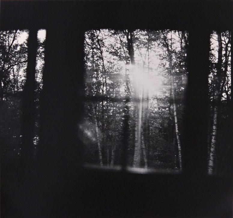 Moon, Birches