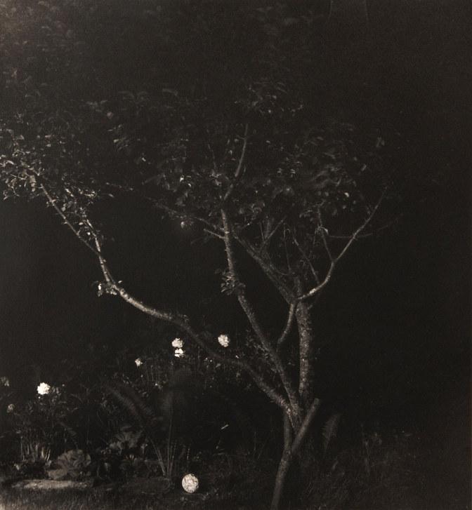 Peonies, Apple Tree