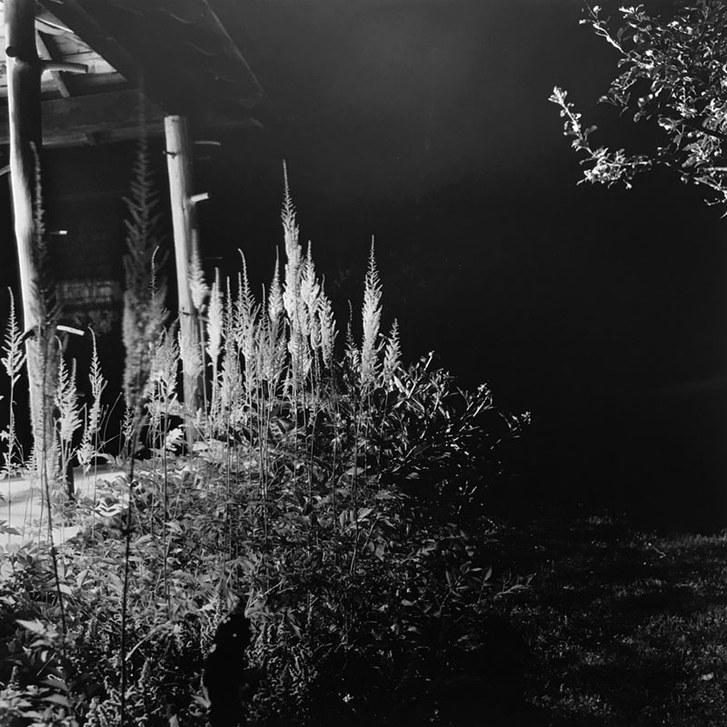 Porch, Astilbe