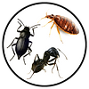 Icon For Bugs Inspection.png
