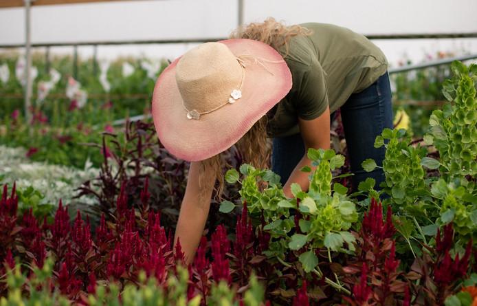 Harvesting, Photo Credit: Kira Ellen Photography