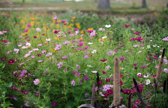 My Field, Photo Credit: Kira Ellen Photography