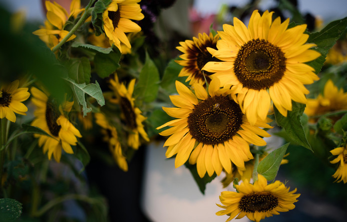Sunflowers, Photo Credit: Kira Ellen Photography