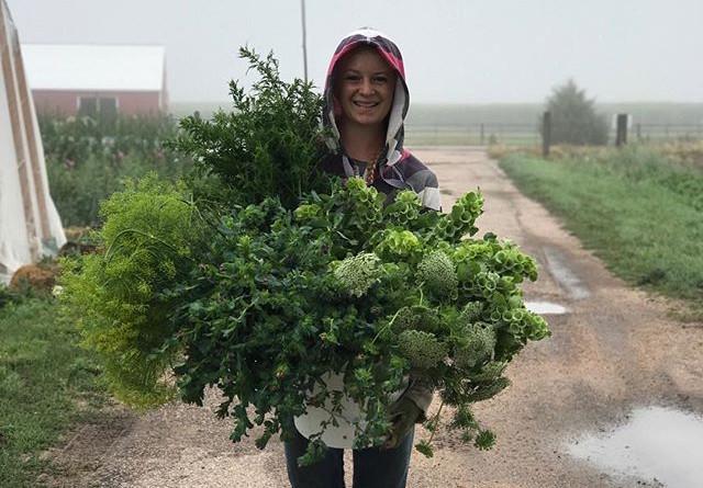 Harvesting in the Rain