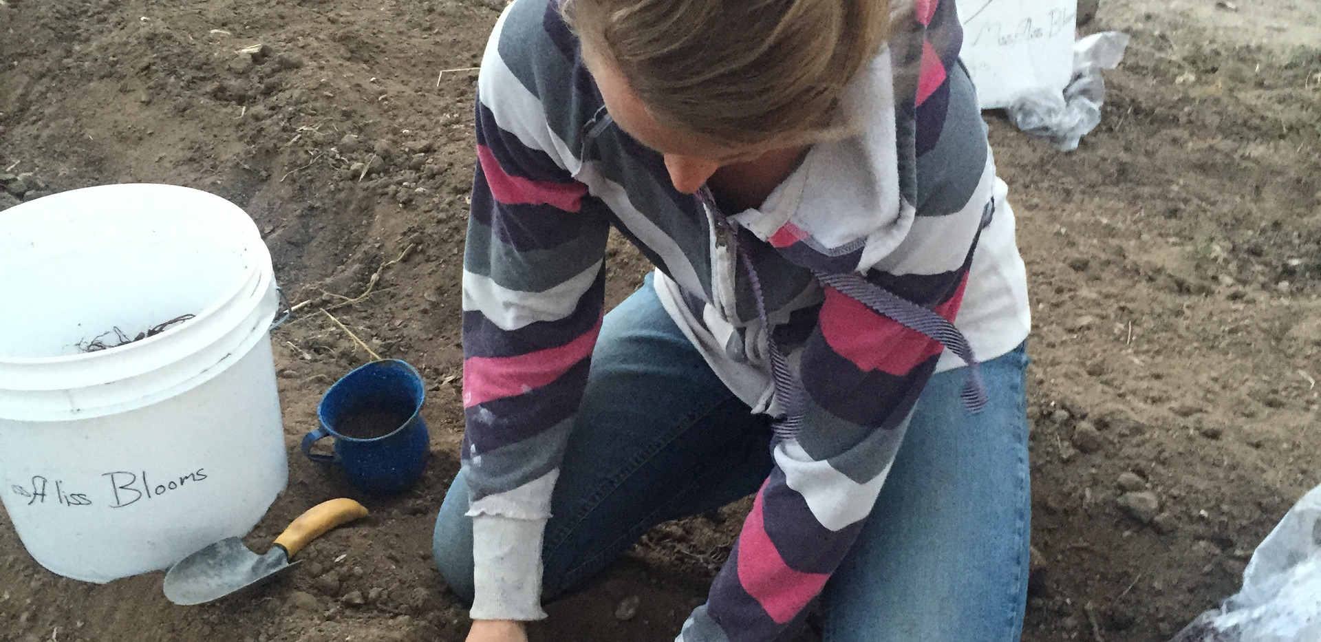 Planting Bareroot Peonies