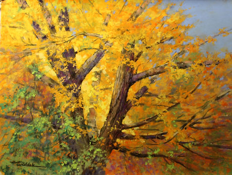 Sunlit Cottonwood