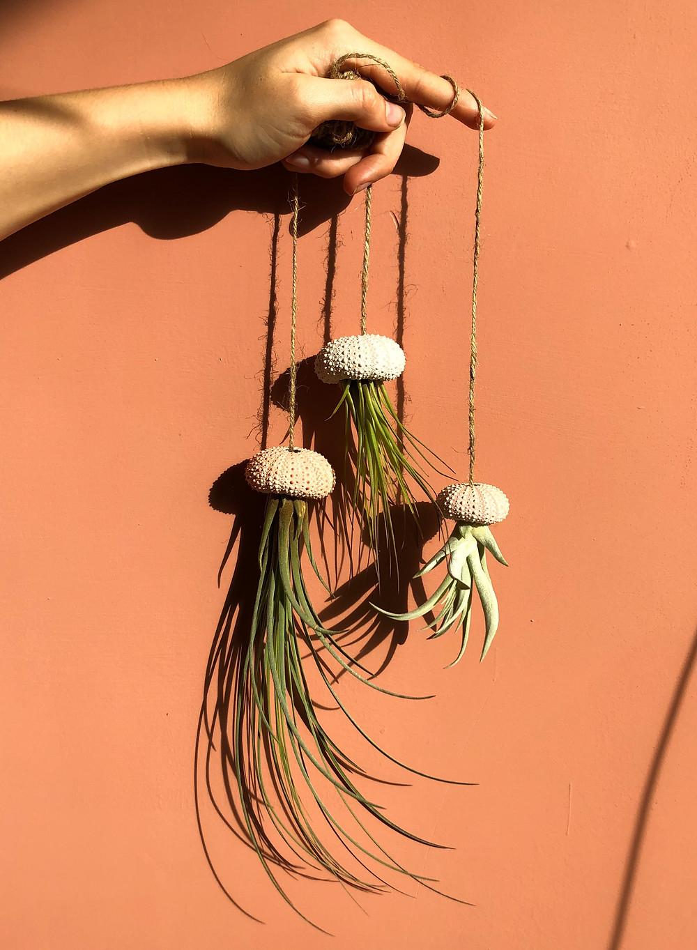 luchtplantjes kwallen, jellyfish airplants diy
