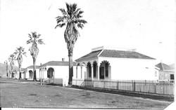 Palm Row Orig Photo