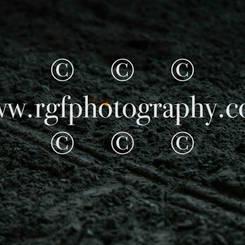 WEU_8751.jpg