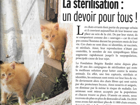 la stérilisation : LA SOLUTION