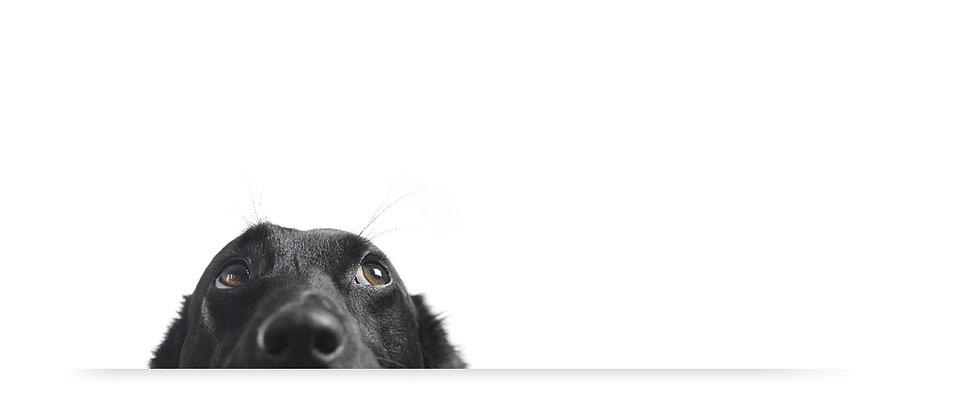 Dog and Emergency logo.jpg