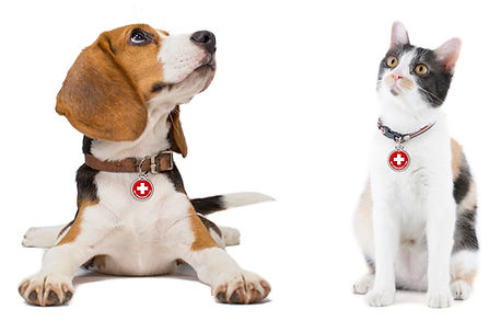 Beagle and Cat close with PET tags.jpg