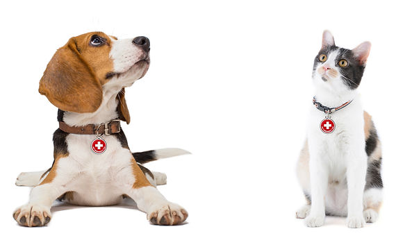 Beagle and Cat with PET tags.jpg