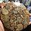 Thumbnail: Ammonite Plate