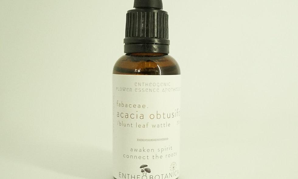 Acacia obtusifolia Flower Essence    Blunt Leaf Wattle