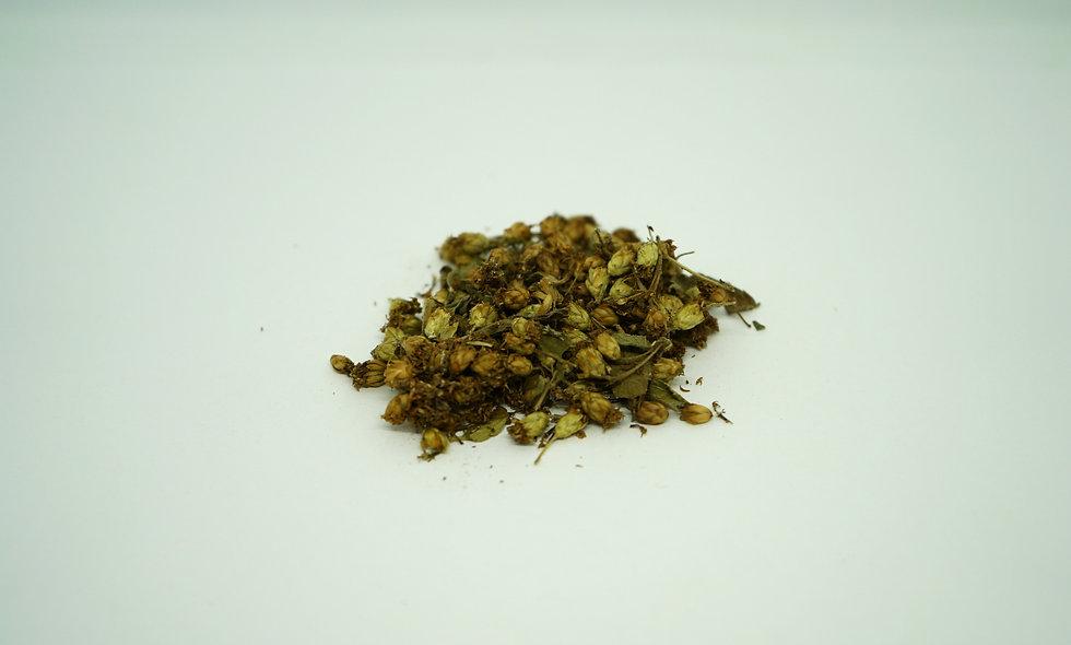 Dodonaea Viscosa var. Angustifolia Seed || Sticky Hops Bush