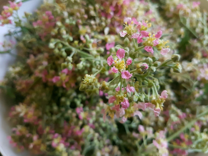 Ayahuasca-Flower Essence.jpg