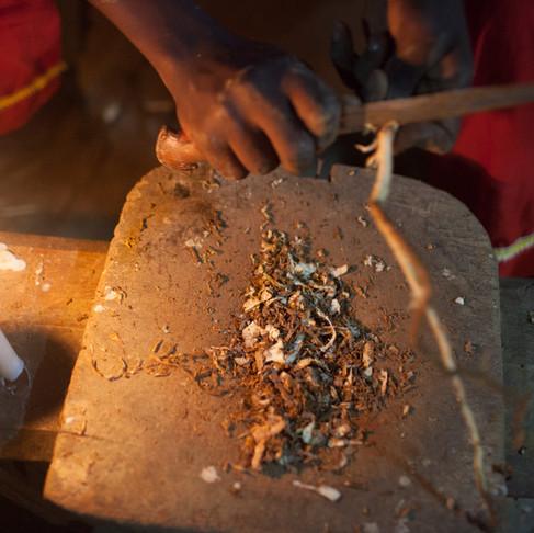 Ethnobotany & Iboga sustainability