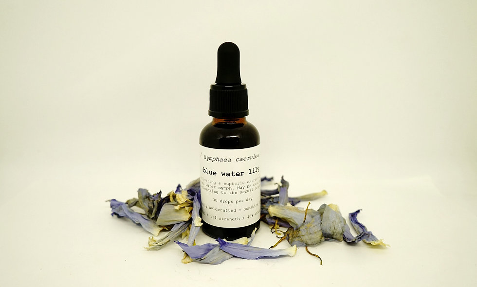 Blue Water Lily Tincture || Nymphaea caerulea