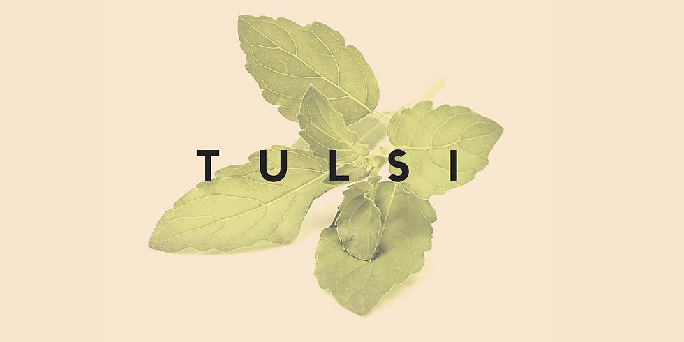 Herbal Dietas : Tulsi : Building Plant Teacher Alliances