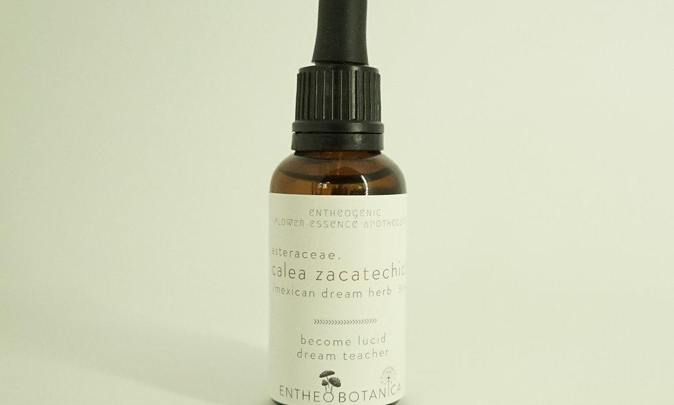Mexican Dream Herb Flower Essence || Calea zacatechichi || Calea ternifolia
