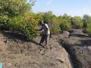 Maintaining Planted trees.jpg