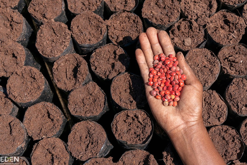 Seeds, Sarobidy Nursery, Madagascar.jpg