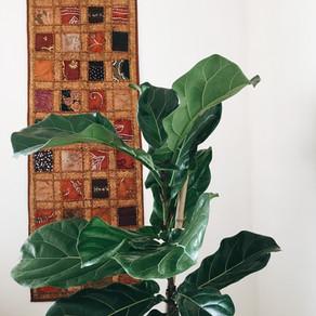 🌿4 plantas para interiores + Recomendaciones para cuidarlas.🌿