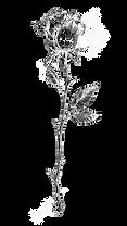 rose-element.png