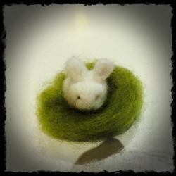 lottes rabbit.jpg