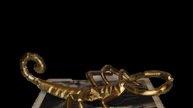 Scorpion Decor