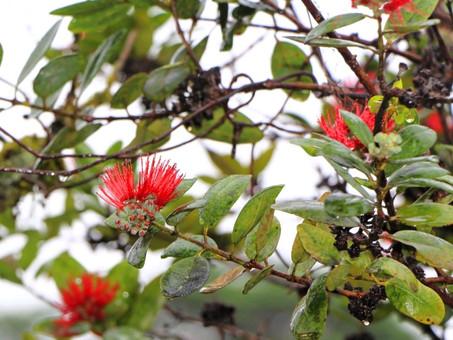 Hawaiian Color Scheme - Fun Fact  of Island Color