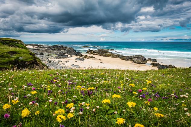 Machair flowers, Swainbost, Ness, Isle of Lewis